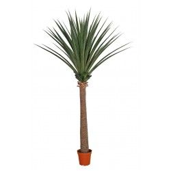 Large Artificial Dracaena (Yucca) 260cm