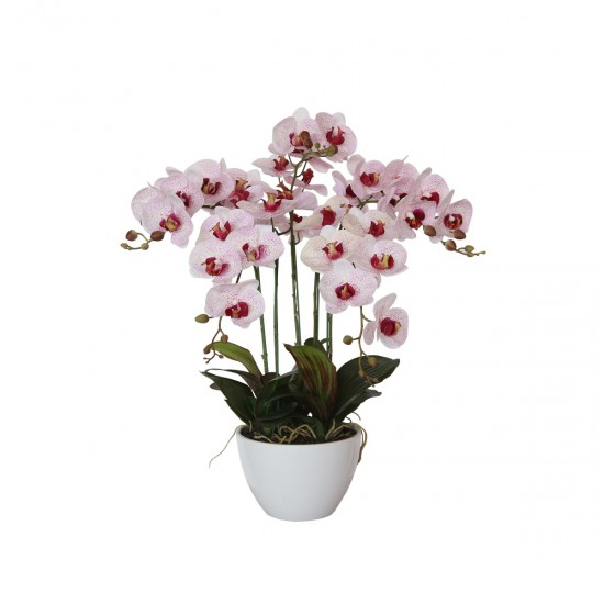 66cm Multi Butterfly Orchid - Pink