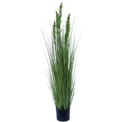 Flowering Native Grass 120 cm