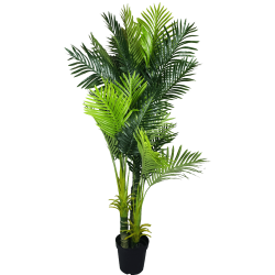 Multi Trunk Hawaii Palm 180cm